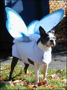 boston terrier halloween costume showcase littlebeastscom - Halloween Costumes In Boston