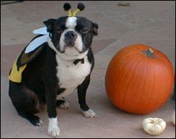 snorts warlock - Halloween Costumes In Boston